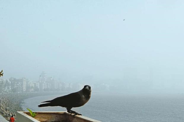 In the novel, which is resonant with literary references, grief comes hurtling in as 'Crow'. Photo: Hindustan Times