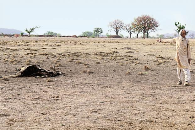 In Bundelkhand, cattle deaths, hunger signal looming famine