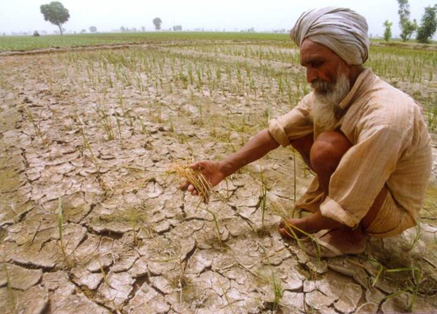 In some parts of the country, the tragedy has already breached the thin line that separates a drought from a famine.  Photo: PTI