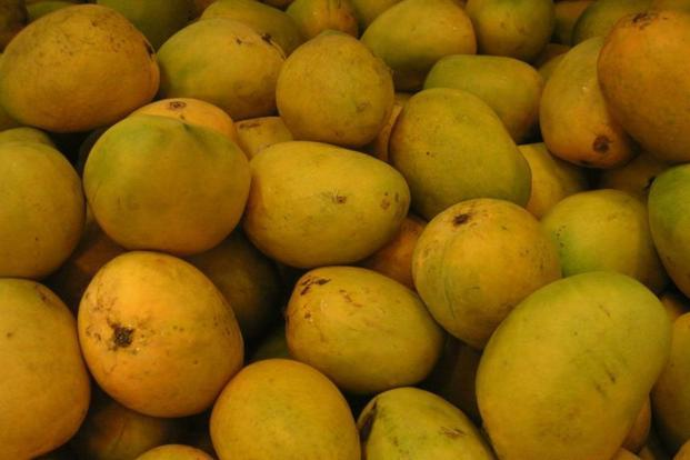Mangoes are luscious and sinful, addictive and delirium-inducing and, as any mango lover knows, they are what joy tastes like.