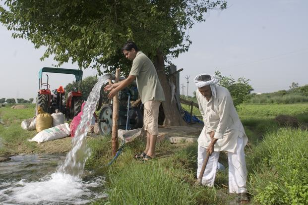 The reuse of treated wastewater to irrigate fields has shown increased yields of okra, brinjal and chillies. Photo: Mint