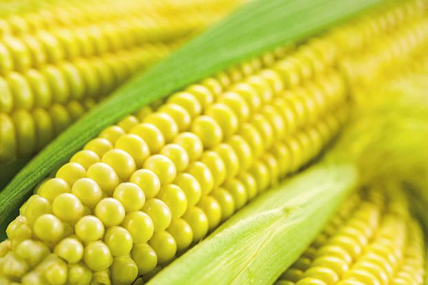 Local corn prices have jumped about 15% so far in June. Photo: iStockphoto