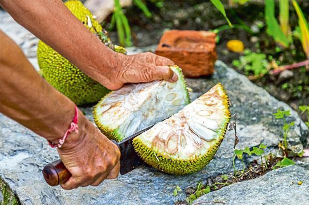 Jackfruit is rich in fibre and is a powerhouse of antioxidants. Photo: iStockphoto