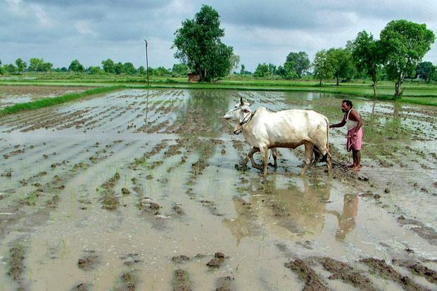 On the back of a great monsoon, this year is going to be a bumper year for Indians. Photo: Reuters