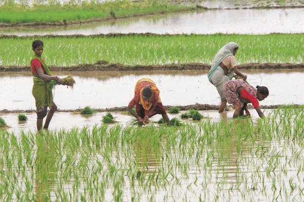 India receives almost 80% of its annual rainfall during the southwest monsoon, which irrigates more than half of its farm lands. Photo: PTI