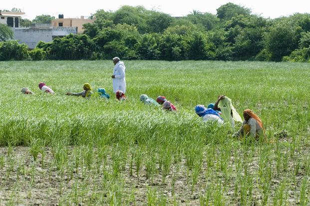 The centre's target is to distribute 140 million cards to as many farmers by March 2017, after collecting and testing 25.3 million soil samples. Photo: Mint