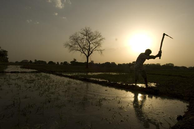 At a time when there are conflicting trends emerging from the national accounts on the state of the economy, it is interesting to look at the village surveys to understand the changing nature of villages and rural India. Photo: Mint