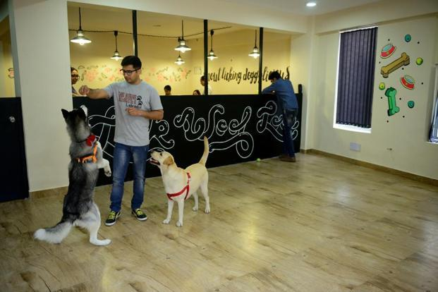 Pets can help heal via animal-assisted therapy. Photo: Pradeep Gaur/Mint