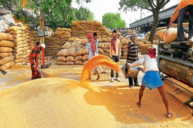 The minimum support price of wheat may be hiked by Rs100 a quintal. Photo: Ramesh Pathania/Mint
