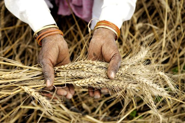The tax department has been identifying tax evaders who pass off non-farm income as farm income. Photo: HT
