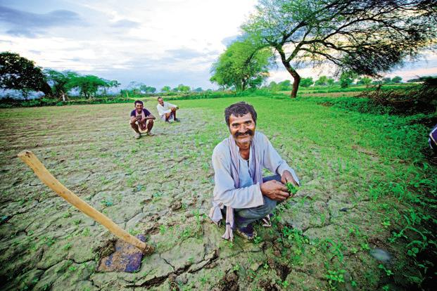 File photo. The mood in Bundelkhand is of a sense of euphoria where farmers are even willing to take a hit on their own incomes. Photo: Priyanka Parashar/Mint