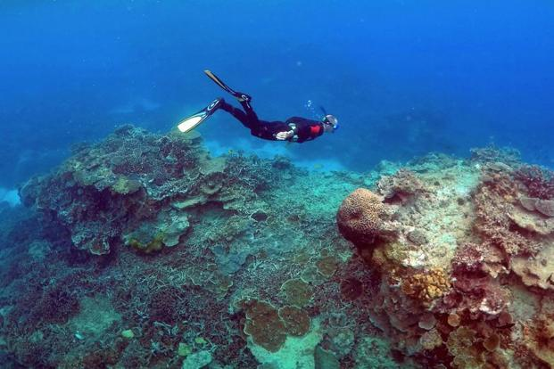 UNESCO's World Heritage Committee stopped short of placing the Great Barrier Reef on an 'in danger' list last year May but asked the Australian government for an update on its progress in safeguarding the reef. Photo: Reuters