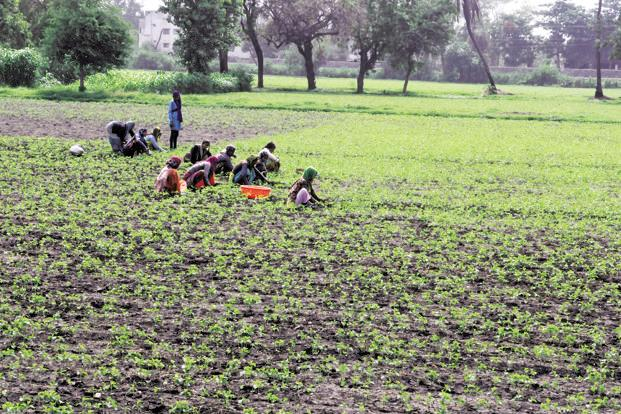 According to the agriculture ministry, during this kharif season32.6 million farmers enrolled under the PMFBY. Photo: HT