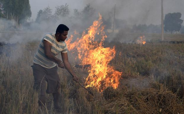 Stubble burning worsens the air pollution in north India during winter. Photo: AFP