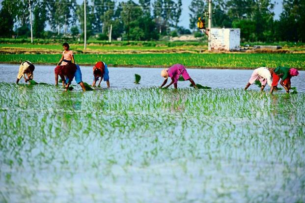 Under the interest subvention scheme, farmers who repay on time are eligible for an additional 3% interest relief over and above the 2% subvention that they get. Photo: Mint