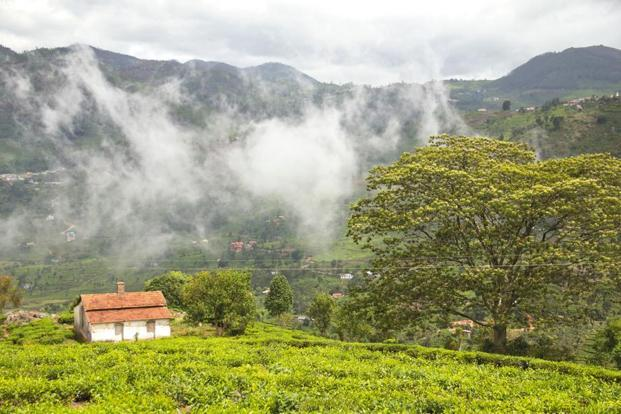 The town of Kotagiri. Photographs by Supriya Sehgal