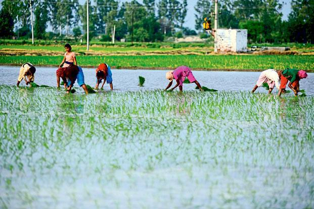 Agricultural growth plummeted to 1.2% in 2015-16 and contracted by 0.2% in 2014-15 after consecutive monsoon failures dented production and heightened rural distress.  Photo: Pradeep Gaur/Mint
