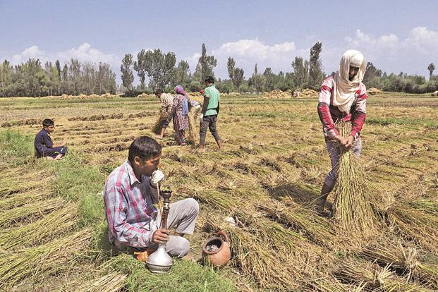 Lack of cash posed difficulty for farmers in sowing of rabi crops. Photo: HT