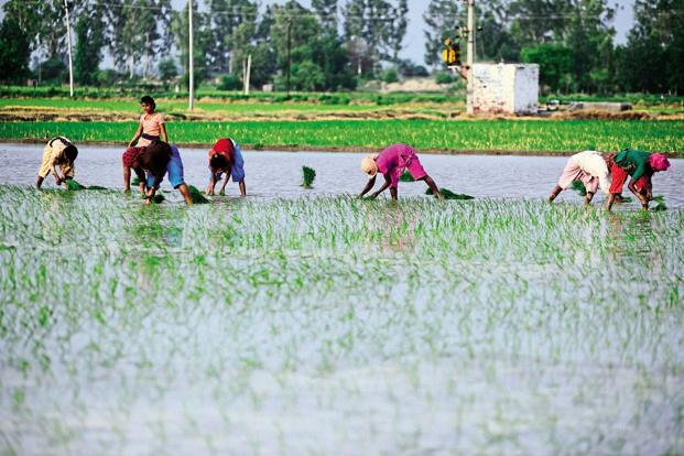 For India, the meltdown in global food prices has meant lower price realization for farmers dependent on export of farm produce. Photo: Pradeep Gaur/Mint