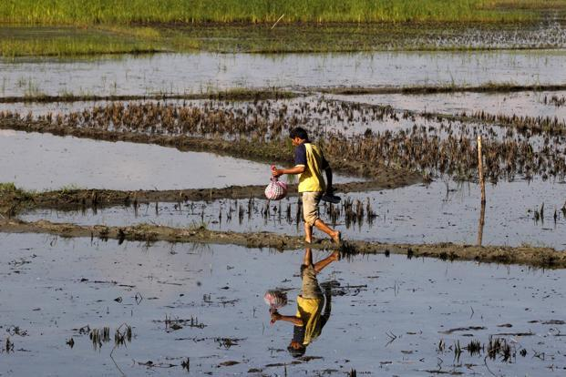 According to the terms of reference of the task force, it was asked to assess and analyse the availability and use of technology, globally and in India for insurance related to crop, and aquaculture. Photo: Reuters