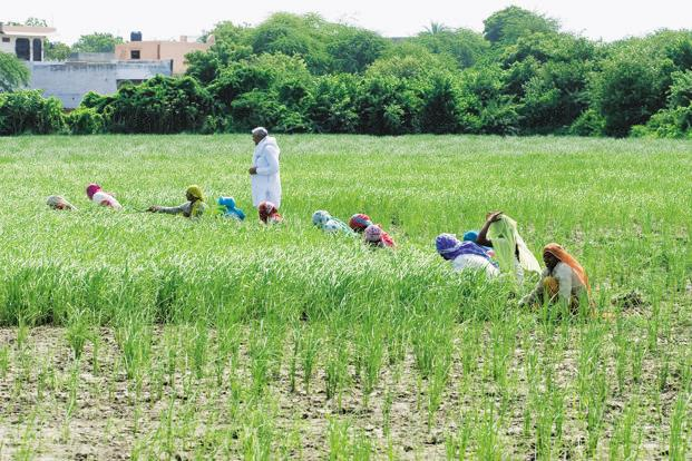 Last year's budget allocated more funds to mitigate weather-related risks by strengthening crop insurance and irrigation schemes. Photo: Hindustan Times
