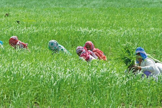 Sustaining growth in agriculture is of high importance to growth markets, where the sector is a primary source of livelihood. Photo: Mint