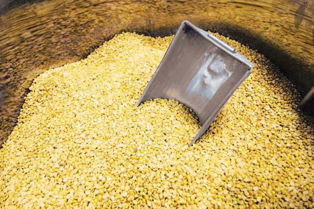 Global cereals output is now expected to reach 2.592 billion tonnes in the 2016-17 season, confirming prospects of a record harvest, FAO said. Photo: HT