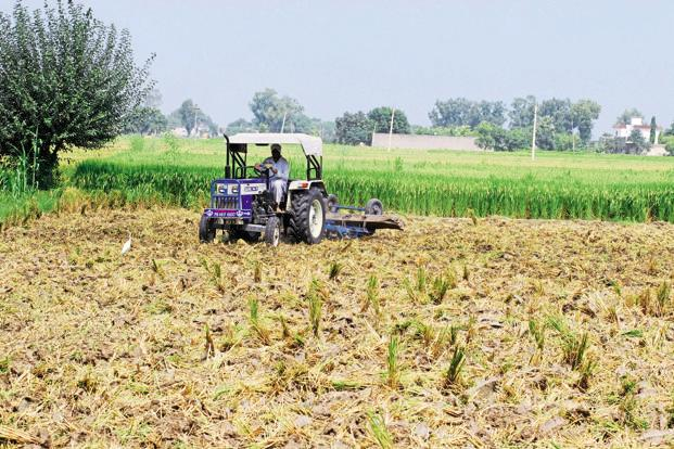 Agriculture is the only sector, which is expected to improve its performance in the second half of the ongoing fiscal year over the first half. Photo: Mint
