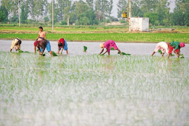 The agricultural ministry has estimated foodgrain production at 272 million tonnes in 2016-17. Photo: Pradeep Gaur/Mint