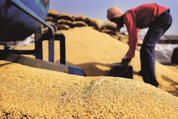 Indian wheat futures have dropped 13% this year, and local prices are currently higher than the government's minimum purchase price. Photo: Mint