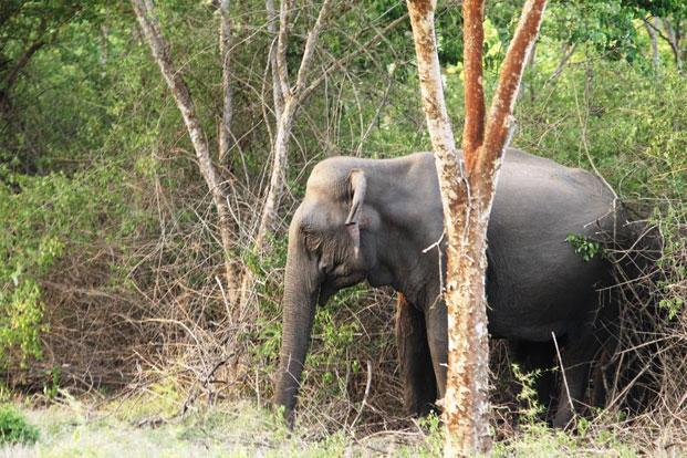 It is not uncommon to see elephants along the roads in Masinagudi. Photo: Supriya Sehgal