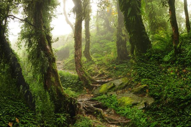 The researchers used data on the tree composition of forests at 1,170 sites throughout the Amazon and compared it to a map of more than 3,000 known archaeological sites representing past human settlements. Photo: iStock