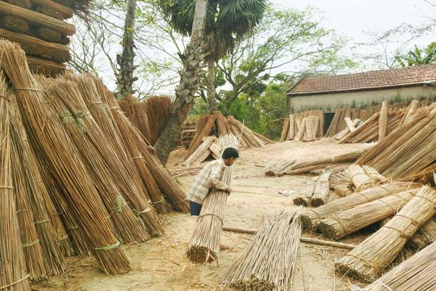 Bales of harvested 'khori' in Narit village. Photo: Ananda Banerjee