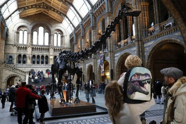 The Diplodocus at the Natural History Museum, London. Photo: Stefan Wermuth/Reuters