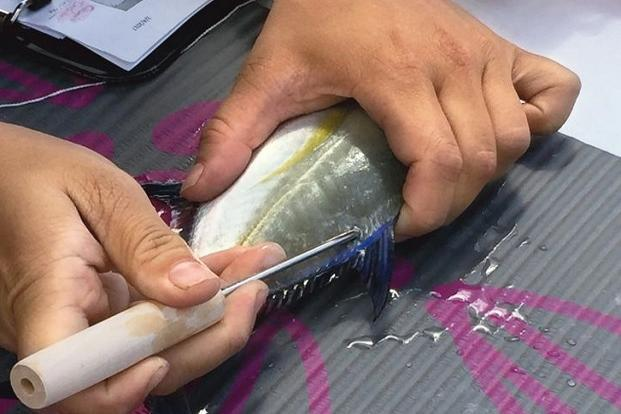 A fish being measured and tagged before being returned to the pond. Photo: Shreya Yadav.