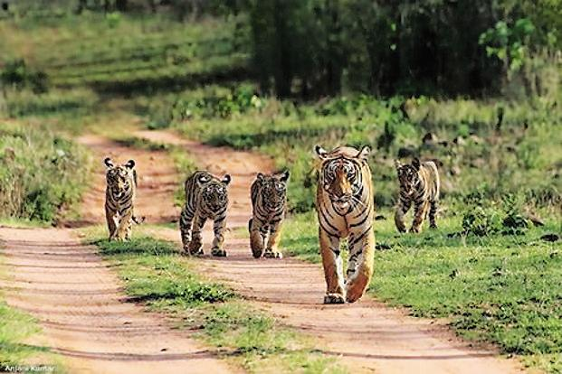 Known for their iconic beauty, geology, ecology and biodiversity, natural world heritage sites across the globe support large populations of rare plant and animal species, including almost a third of the world's remaining 3,890 wild tigers and 40% of all African elephants. File photo: HT