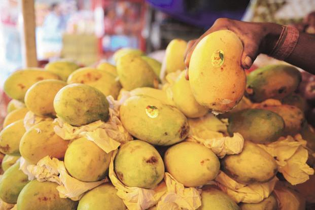 Banganapalle mangoes have been grown for over 100 years in Andhra Pradesh and are also known as Beneshan, Baneshan, Benishan, Chappatai and Safeda. Photo: Mint (representational image)