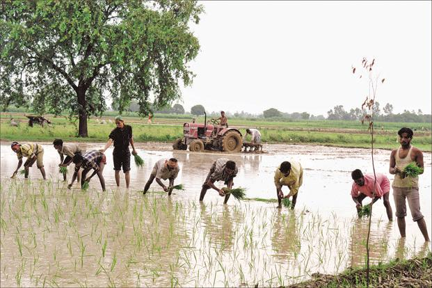 The monsoon delivers about 70% of India's annual rainfall, critical for the country's agriculture sector. Photo: HT