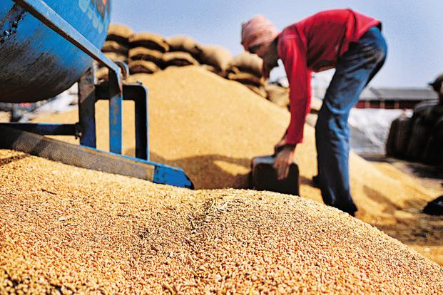 India to produce record food grains in 2016/17