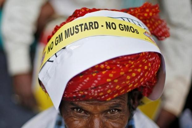 What raises the chances of allowing GM mustard is the history that Narendra Modi as chief minister of Gujarat in 2001 did not cede to the Centre's directive to burn down Bt cotton crops. Photo: Reuters