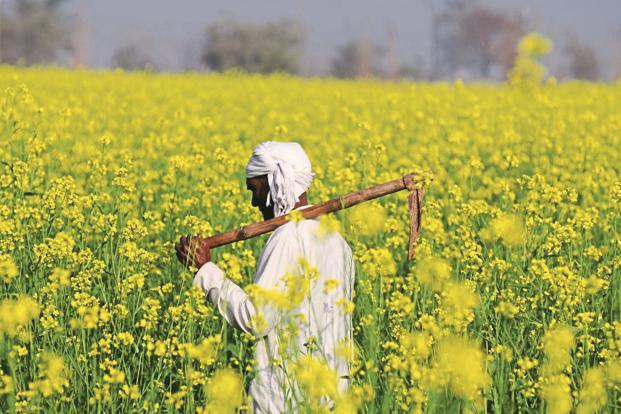 GM mustard has been developed by the Delhi University-based Centre for Genetic Manipulation of Crop Plants (CGMCP).