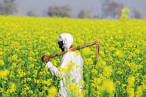 Centre comes out with FAQs to allay fears on GM mustard