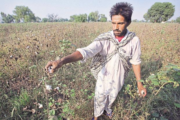 At present, the total agricultural debt in Punjab is pegged at Rs85,000 crore. Photo: Reuters