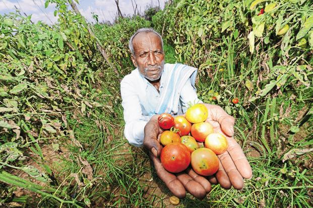 Indian farmers now produce more than double the quantity of fruits and vegetables compared to what they did in early 2000. Photo: Hemant Mishra/ Mint