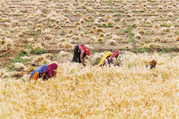Agriculture, which continues to be the largest employer, had lost 35 million workers between 2004-05 and 2011-12. Photo: PTI