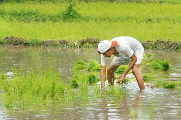 India receives over 70% of its annual rainfall during the four-month monsoon season, which also irrigates over half of the crop area that lacks assured irrigation. Photo: Hemant Mishra/Mint