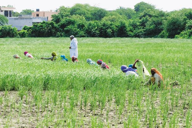 The lack of supportive prices and the consequent slowdown in farm earnings seems to have upset the land-owning class the most. Photo: Mint