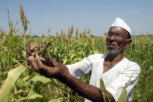 The total outlay on interest subsidy on crop loans for 2017-18 is 49% higher than the revised estimate of Rs13,619 spent in 2016-17. Photo: Mint