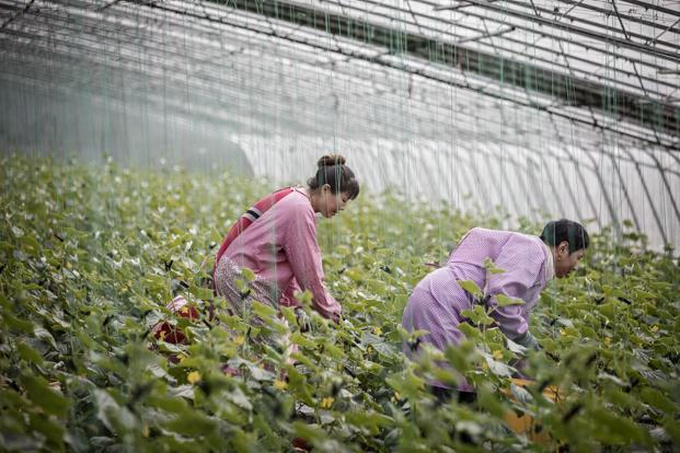 The roots of China's industrial success lay in agriculture, argues a new paper. Photo: Qilai Shen/Bloomberg