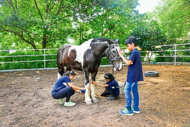 The 19-year-old riding academy has programmes for both adults and children.